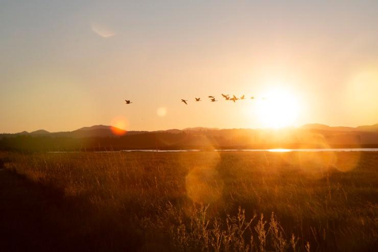 birds-sunset